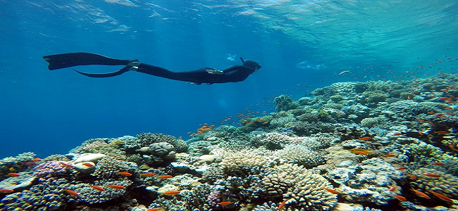 Snorkeling in THe World