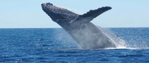 Get to See the Humpback Whales